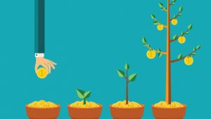 blog-15-growth-cycles